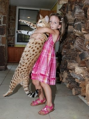 Savannah Cats are child friendly